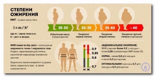 Индекс ожирения тела. Формулы для расчета степени ожирения у взрослых