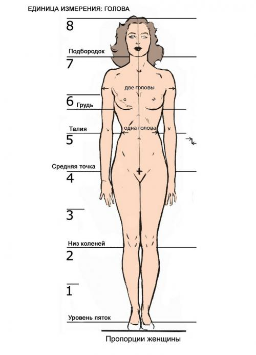 Объем талии. Масса тела