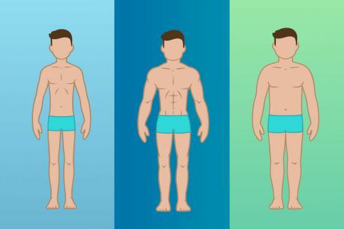 Как определить тип телосложения у подростка. // Что такое типы телосложения?