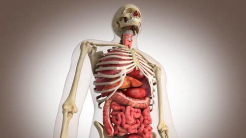 Сколько стоит. Сколько стоят органы человека?